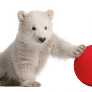 Werbung Mit Tieren: Hertha Spielt Tacheles • Symbolbild: Eric Isselée / Adobe Stock